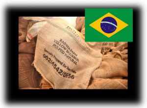 Brazylia Yellow Bourbon / 1000g