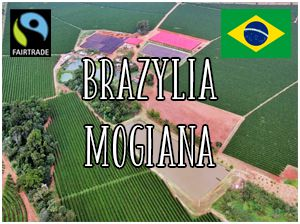 Brazylia Mogiana Specialty Plus Fairtrade / 1000g
